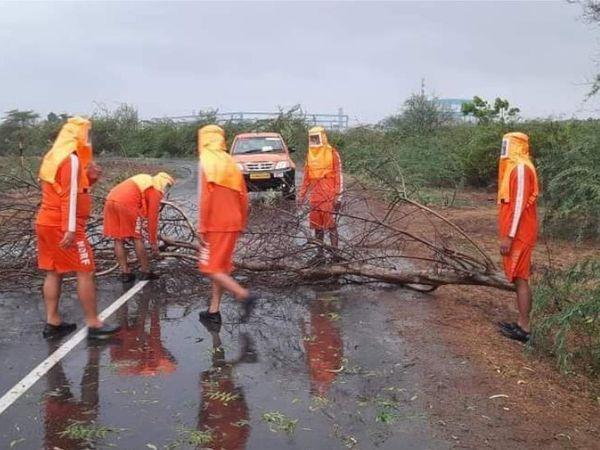 મોટી સંખ્યામાં વૃક્ષો ધરાશાયી થવાની ઘટના બની