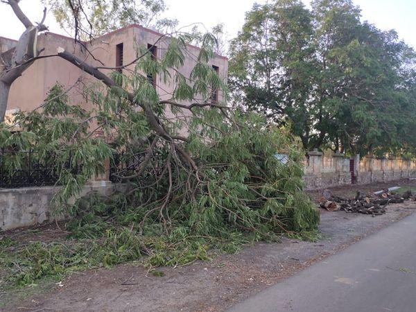 બીઆરસીભવનમાં વૃક્ષોનું નિકંદન કાઢવામાં આવ્યું. - Divya Bhaskar