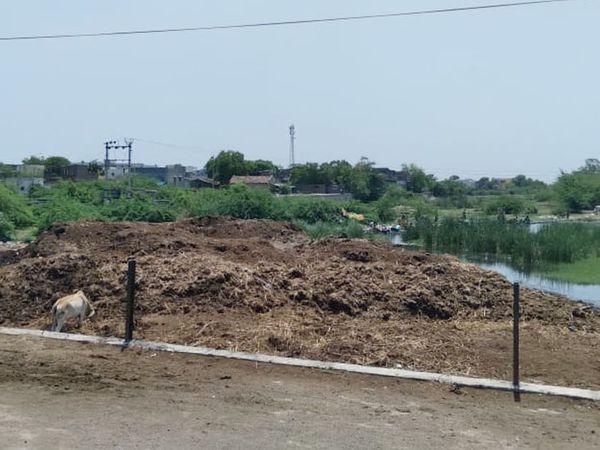 ચુડાની વાસળ નદીમાં ઠેર ઠેર બાવળો અને ઝાળી ઝાંખરા ઉગી નિકળ્યા છે. - Divya Bhaskar