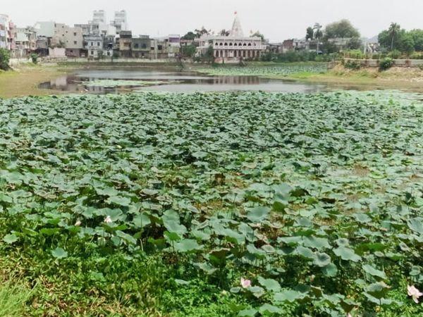 છોટાઉદેપુર નગરની શોભા ગણાતું કુસુમસાગર તળાવમાં ઊગી નીકળેલી વેલો સાફ કરવા ટ્રીટમેન્ટ કરાવવામાં આવશે. - Divya Bhaskar