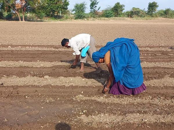 વરસાદ પડવાની સંભાવનાથી ખેડૂતો આગોતરૂ વાવેતર કરી રહ્યા છે.
