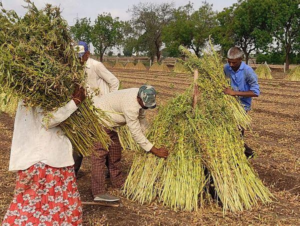 कई खेतिहर मजदूर अपने वतन से नहीं लौटे हैं इसलिए फसल कटाई के समय परेशानी होती है।