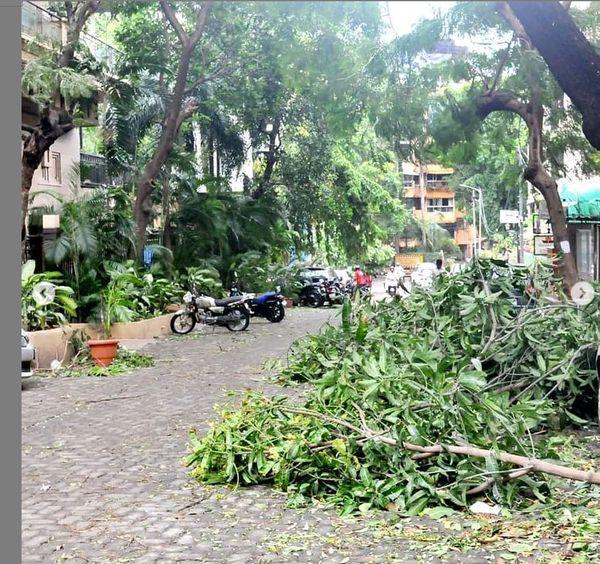 मुंबई में कई जगह गिरे पेड़