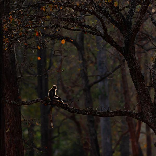 पराग ने यह तस्वीर कर्नाटक के नागरहोल नेशनल पार्क एंड टाइगर रिजर्व में खींची थी।