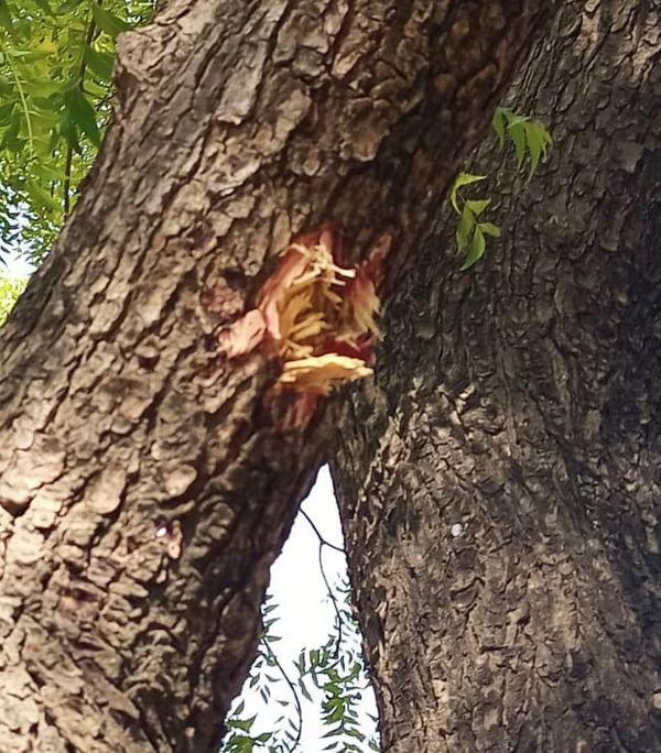 पेड़ में लगी गोली।