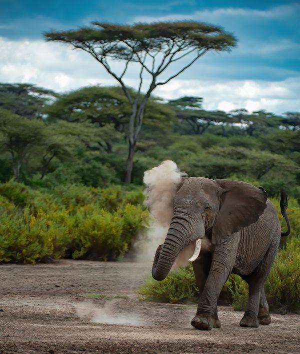 वाइल्डलाइफ फोटोग्राफर पराग कुलकर्णी ने अफ्रीका के नदुतु कंजर्वेशन एरिया सेरेंगेटी में खींची यह तस्वीर भास्कर को उपलब्ध कराई है। ए.ओ. स्मिथ इंडिया के मैनेजिंग डायरेक्टर पराग शौकिया फोटोग्राफर हैं, जिन्होंने कोई बेसिक ट्रेनिंग नहीं ली है।