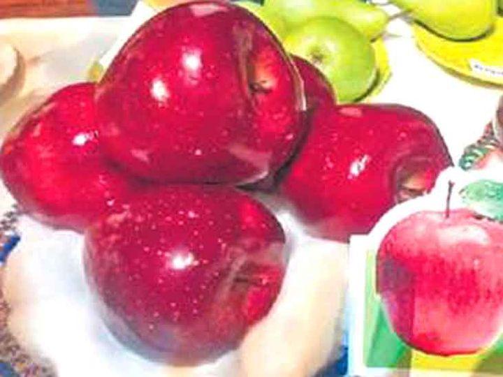 प्रेम चौहान ने नई तकनीक से सेब उगाया। - Dainik Bhaskar
