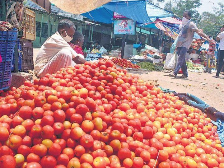 थोक मंडियों में भी फसल की आवक कम रहने से पिछले कुछ सप्ताहों से टमाटर की कीमत ऊंची चल रही है - Money Bhaskar
