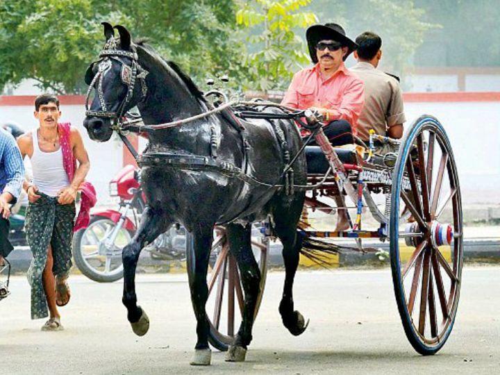 अनंत सिंह को घोड़ों का भी बहुत शौक है। कहते हैं कि उन्हें जो घोड़ा पसंद आ जाता है, उसे खरीद लेते हैं। - Dainik Bhaskar