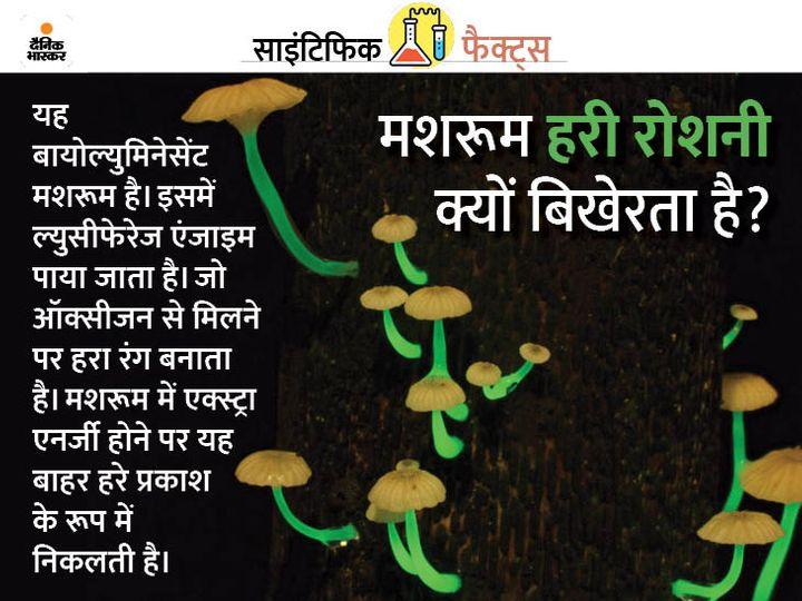 दुनियाभर में ऐसे चमकने वाले मशरूम की 97 प्रजातियां हैं। फोटो साभार : स्टीफेन एक्सफोर्ड - Dainik Bhaskar