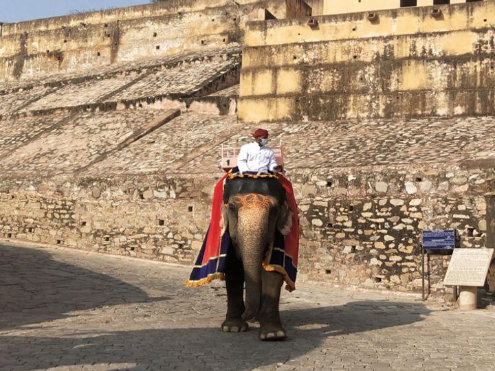 राजस्थान और राजधानी जयपुर में तेजी से बढ़ रहे आंकड़ें भले ही परेशान करने वाले हो। लेकिन आमेर में पर्यटक पिछले दिनों शुरु हुई हाथी सवारी का लुत्फ उठा रहे हैं। - Dainik Bhaskar