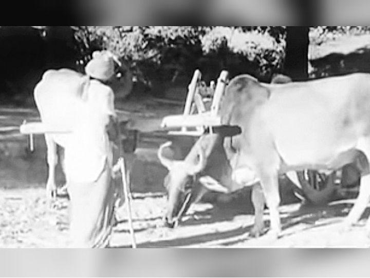 1966 में हरित क्रांति के लिए पंजाब को न चुना गया होता तो शायद धान-गेहूं आज भी यहां की मुख्य फसल न होती। - Dainik Bhaskar