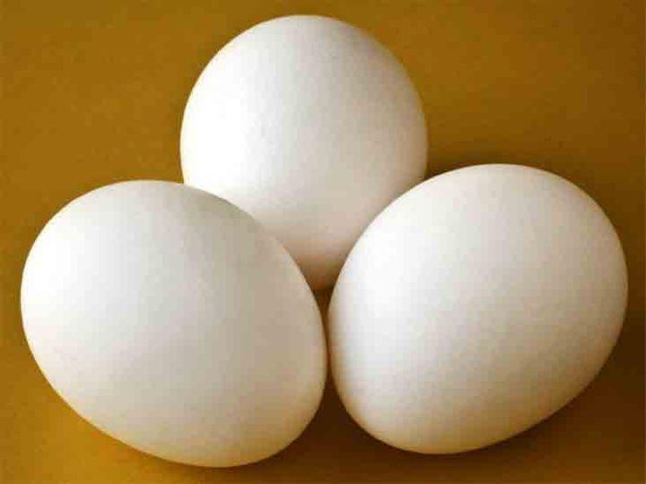 शहर में बर्ड फ्लू के खतरे के बीच चिकन व अंडों के मूल्य में कमी आई। डेमो फोटो - Dainik Bhaskar