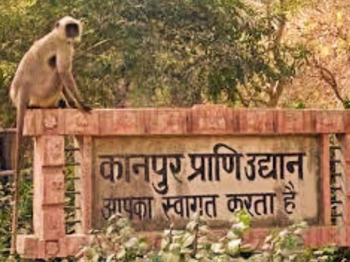 केंद्रीयमत्स्य मंत्रालय,पशुपालन और डेयरी की ओर से जारी की गई जांच रिपोर्ट ने 5 जनवरी को हुई पक्षियों की मौतों के पीछे की वजह बर्ड फ्लू बताई गई है। - Dainik Bhaskar