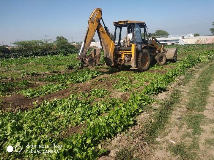 जलालपुर मे 20 बीघा जमीन पर  खड़ी फसल को नष्ट करता मदाखलत अमला। - Dainik Bhaskar