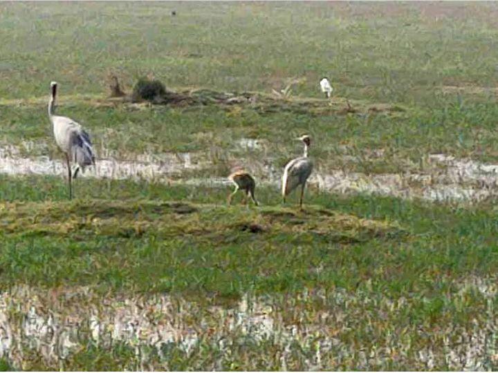 भरतपुर। भरतपुर में पक्षियों की मौतें लगातार हो रही हैं लेकिन राहत की बात है कि अभी तक बर्ड फ्लू की पुष्टि नहीं हुई है। विभाग सभी वॉटर बॉडीज पर निगाह बनाए हुए है। - Dainik Bhaskar