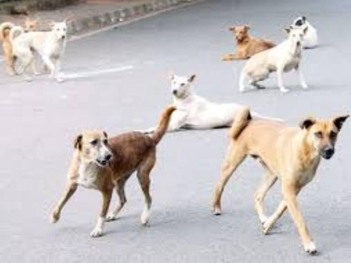 कुत्तों ने बुजुर्ग महिला को नीचे गिराकर सिर, हाथ और पैरों पर काट खाया। - Dainik Bhaskar