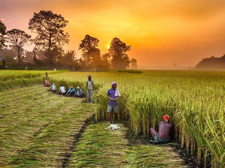 बता दें कि पंजाब और हरियाणा के किसान इस समय सरकार के तीन नियमों का विरोध कर रहे हैं। पंजाब और हरियाणा में अभी तक आढ़तियों के जरिए पेमेंट होता है - Dainik Bhaskar