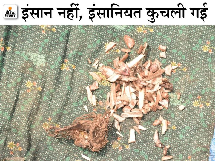After lying on the road for 2 days, only the bones of the elderly body were left, they too were shattered.  - Dainik Bhaskar