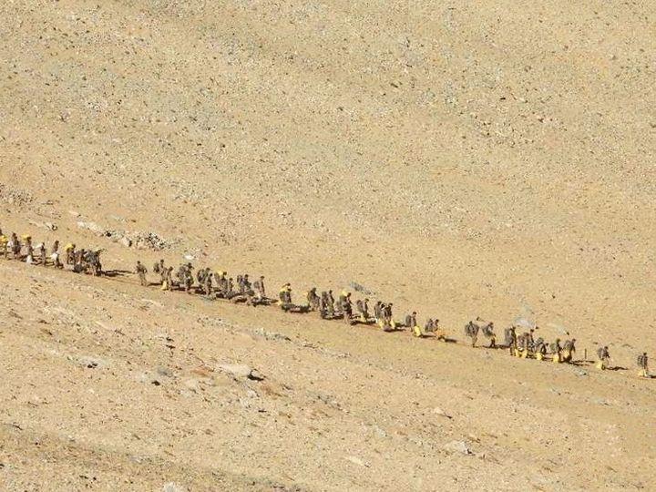 पूर्वी लद्दाख में लौटती चीनी सेना। 16 फरवरी को ये फोटो भारतीय सेना ने जारी किया था। - Dainik Bhaskar
