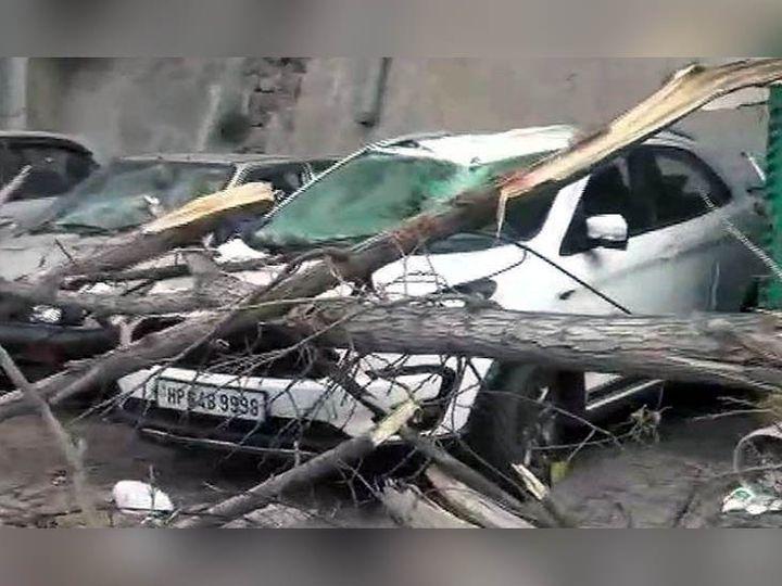सोलन में पेड़ गिरने से टूटी पार्किंग में खड़ी कार। इस घटना को लेकर पार्किंग के मालिक नगर परिषद के रवैये को जिम्मेदार बता रहे हैं। - Dainik Bhaskar