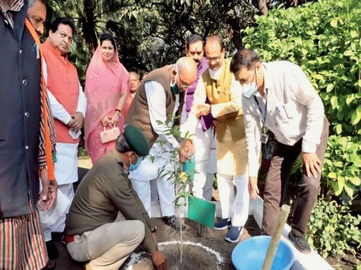 सीएम हाउस में मुख्यमंत्री ने लगाया पौधा। - Dainik Bhaskar