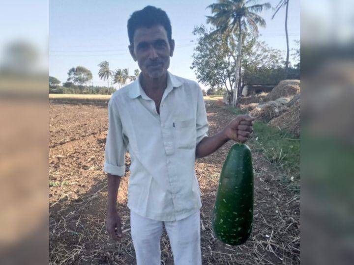 ખેડૂતે 18 કિલોની દૂધી ઉગાડી - Divya Bhaskar