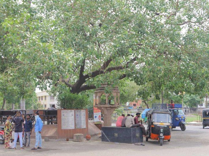 શહેરમાં ઘટાદાર વૃક્ષો હવે ગણ્યાગાઠ્યા છે. ખુદ પાલિકા પાસે જ આવા વૃક્ષોના આંકડા નથી. - Divya Bhaskar