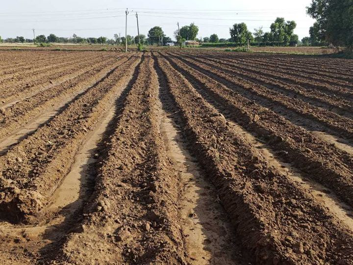 મહેસાણા જિલ્લાના ખેડૂતોએ કપાસની વાવણીની શરૂઆત કરી. - Divya Bhaskar