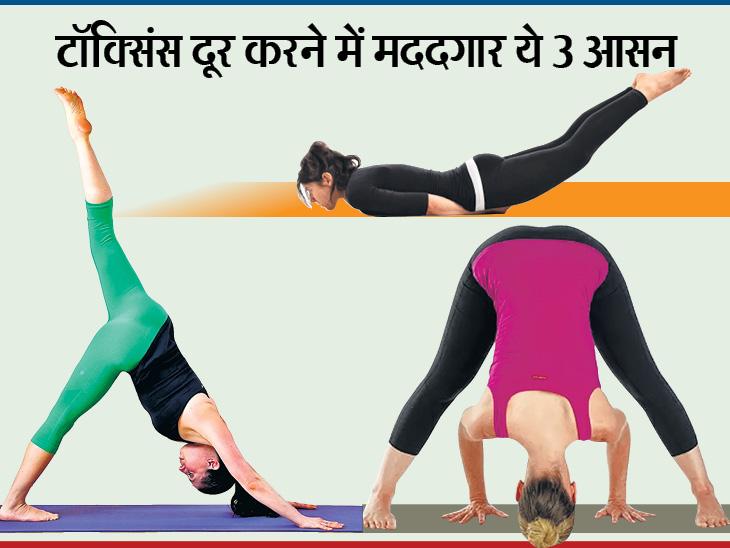 दिवाली के बाद शरीर के टॉक्सिंस दूर करने के लिए मुर्धासन, अधोमुख श्वानआसन और शलभासन करें|लाइफ & साइंस,Happy Life - Dainik Bhaskar