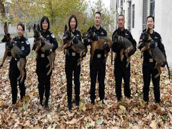 दुनिया में पहली बार पुलिस विभाग में एक साथ भर्ती किए गए 6 क्लोन डॉग  - Dainik Bhaskar