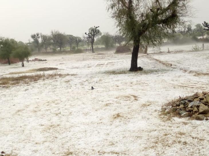 सीकर के जाना गांव में खेत में ओलों की सफेद चादर जम गईं।