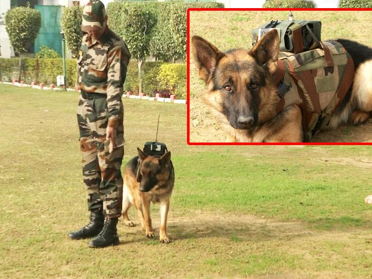 सेना ने डॉग स्क्वाड सर्विलांस सिस्टम बनाया, यह एक किमी के दायरे में दुश्मन की जानकारी भेजने में सक्षम देश,National - Dainik Bhaskar