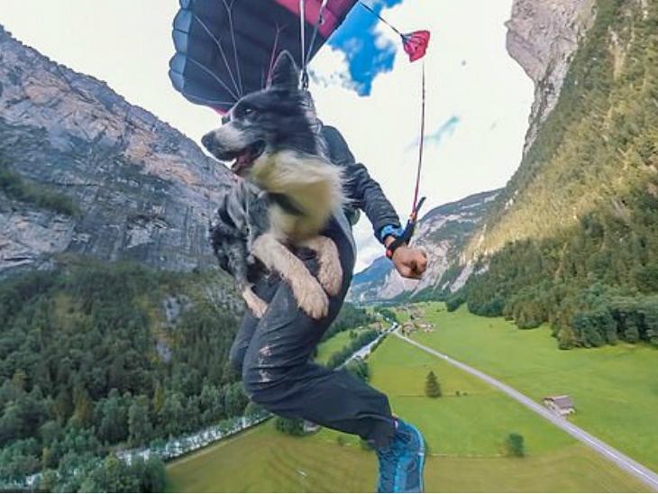 मालिक के साथ कुत्ते ने 2300 फीट ऊंची चट्टान से 41वीं जम्प लगाई, पैराशूट से सेफ लैंडिंग की  - Dainik Bhaskar