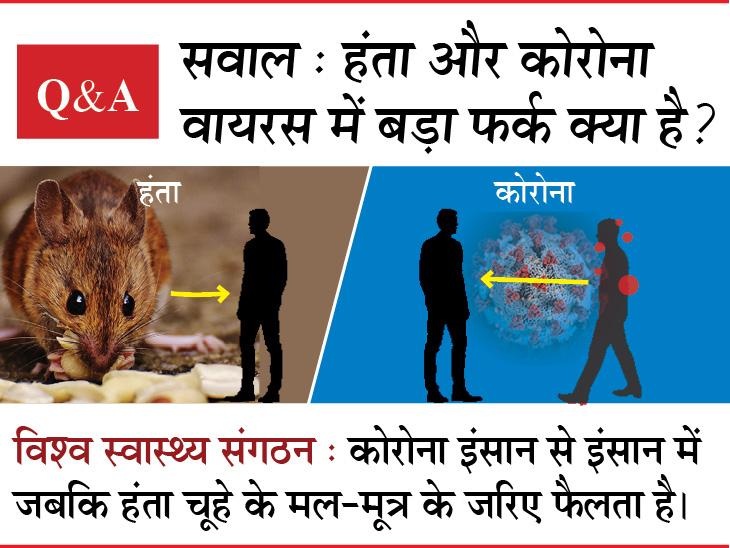 कोरोना के बाद चीन में सामने आया चूहे से फैलने वाला हंता वायरस, 8 सवालों से समझिए इसके लक्षण, बचाव और वजह|देश,National - Dainik Bhaskar