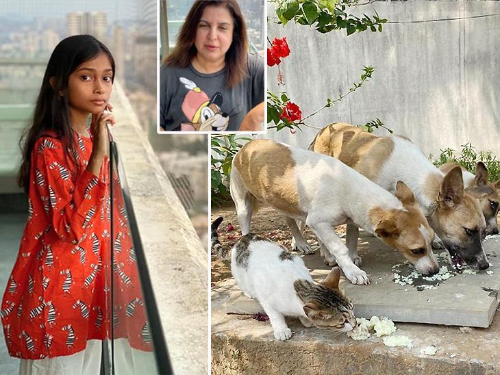 फराह खान की बेटी को सताई स्ट्रीट डॉग्स की चिंता, उनके खाने के इंतजाम के लिए दे दिए गुल्लक के सारे पैसे|बॉलीवुड,Entertainment - Dainik Bhaskar