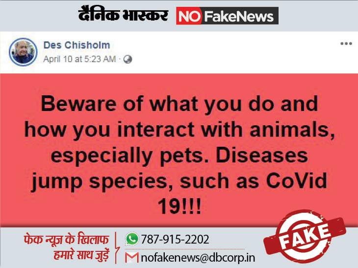 पालतू जानवर भी हो चुके हैं कोरोना का शिकार लेकिन इनसे अभी मनुष्यों में संक्रमण फैलने का प्रमाण नहीं|कोरोना - वैक्सीनेशन,Coronavirus - Dainik Bhaskar
