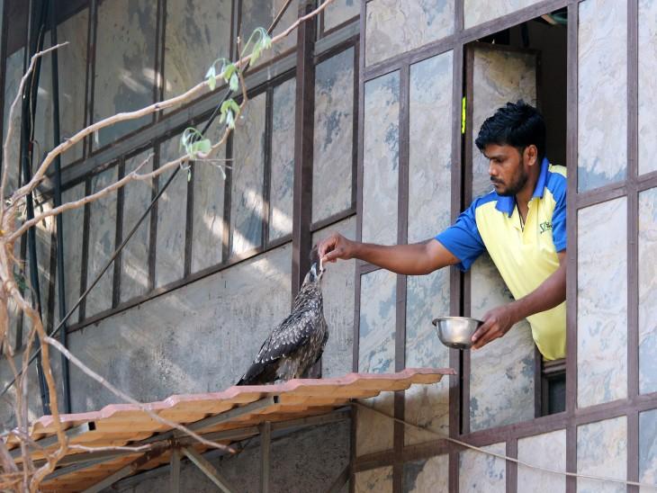 मुंबई में एक शख्स अपने घर की खिड़की से एक बाज को दाना खिलाता हुआ।