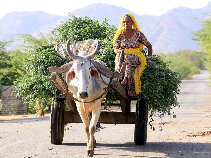 यह तस्वीर अजमेर की है। लॉकडाउन के बीच किसानों को खेत-खलिहान के कामों के लिए छूट मिली है।