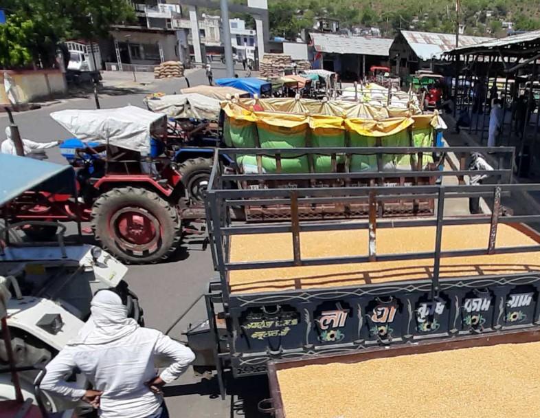 लॉकडाउन के दौरान गेहूं की खरीदी चालू है। रायसेन में एक किसान गेहूं खरीदी केंद्र पहुंचा।