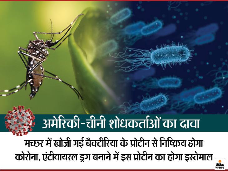मच्छर के बैक्टीरिया से कोरोना वायरस को खत्म करने की तैयारी, चीन और अमेरिका के वैज्ञानिकों ने मिलकर की रिसर्च कोरोना - वैक्सीनेशन,Coronavirus - Dainik Bhaskar