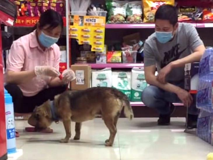 20 मई को फिर शिआओ तायकॉन्ग हॉस्पिटल में पहुंचा था उस दौरान वहां मरीजों की भीड़ थी। हॉस्पिटल स्टाफ को शिआओ के बारे में कई शिकायत मिलीं तो वुहान में जानवरों की देखभाल करने सरकारी संस्था से सम्पर्क किया। संस्था के सदस्य आए और शिआओ को ले गए। वहां उसकी देखभाल हुई, नसबंदी के बाद उसे वापस छोड़ा गया।