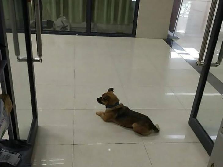 हॉस्पिटल में काम करने वाली 65 वर्षीय सफाईकर्मी के मुताबिक, हुबेई प्रांत में रहने वाले कुत्ते के मालिक फरवरी में कोरोना से संक्रमित हुआ था। उसे वुहान के हॉस्पिटल में भर्ती कराया गया। 5 दिन बाद ही उसकी मौत हो गई।