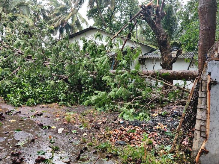 तेज हवाओं के चलते रायगढ़ में कई पेड़ उखड़ गए। घरों को भी नुकसान पहुंचा।