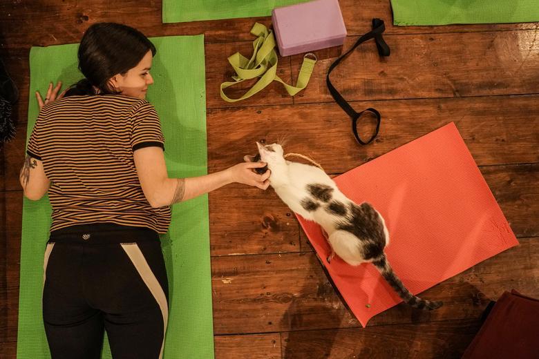 पाला क्रैरी की यह बिल्ली हर काम की तरह योग में भी उनका भरपूर साथ देती है।
