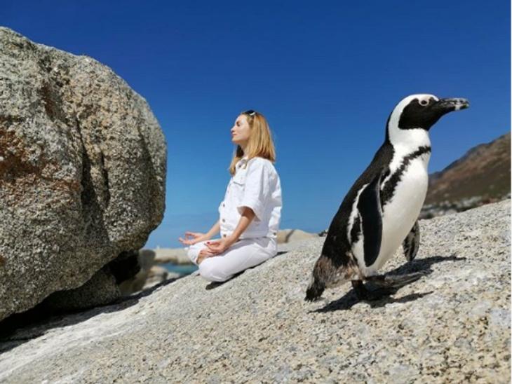 लॉकडाउन ने अन्य जीवों और इंसान के बीच की दूरियों को कम किया । इसका जीता-जागता उदाहरण है जूलिया रज़ुमोस्काया की साउथ अफ्रीका के बोल्डर बीच पर पैंगुइन के साथ योगा करती ये फोटो।