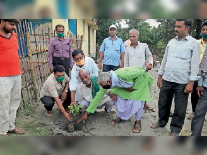 पौधा लगाते प्रखंड प्रमुख, आरडीओ, पीओ व अन्य। - Dainik Bhaskar