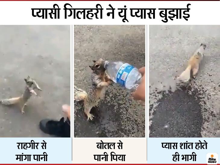 प्यास से बेहाल गिलहरी ने राह चलते परिवार से हाथ हिलाकर पानी मांगा, मिनरल वॉटर की बोतल को मुंह से लगाया तो पूरा पी गई|लाइफ & साइंस,Happy Life - Dainik Bhaskar