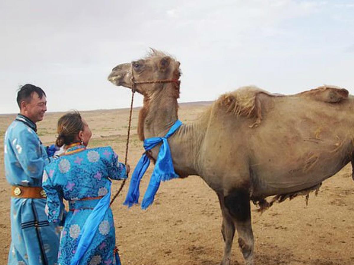 7 दिन तक रेगिस्तान में 100 किमी का सफर तय करके अपने मालिक के वापस पहुंचा ऊंट, 9 महीने पहले इसे बेच दिया गया था|लाइफ & साइंस,Happy Life - Dainik Bhaskar