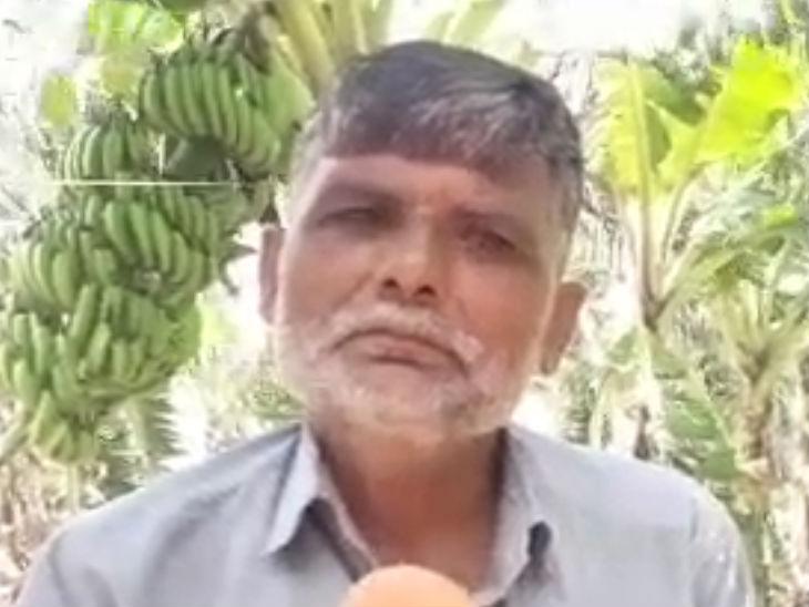 जालौन में पहली बार किसान ने टिश्यू कल्चर से की केले की खेती, किसानों के प्रेरणास्रोत बने बृजेश|उत्तरप्रदेश,Uttar Pradesh - Dainik Bhaskar